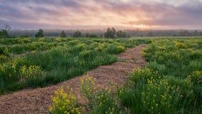 Morning rural landscape Stock Image