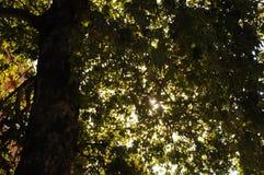 Morning& x27; s-Sonnenschein zwischen Bristol& x27; s-Baum Stockfotografie