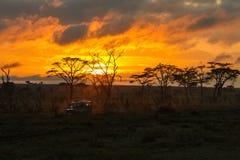 Morning safari drive Stock Photo