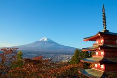 View of autumn leaves and Mt. Fuji. Morning sakura`s autumn leaves and Mt. Fuji are beautiful royalty free stock photos