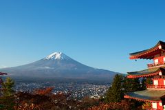 View of autumn leaves and Mt. Fuji. Morning sakura`s autumn leaves and Mt. Fuji are beautiful royalty free stock images
