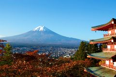 View of autumn leaves and Mt. Fuji. Morning sakura`s autumn leaves and Mt. Fuji are beautiful royalty free stock image