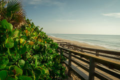 Morning at Satellite Beach in Florida. Royalty Free Stock Image