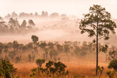 Morning in savannah Stock Images
