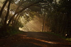 Morning scene. Morning sunlight creeping through the trees Royalty Free Stock Images