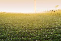 Morning scene , agriculture land - rural India. Sun rises in the background, over a green agriculture field. Rural Indian scene. Nature stock image Stock Photo