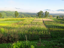 Morning scene of beautiful crop field, small hut, mountain, blue Royalty Free Stock Photography