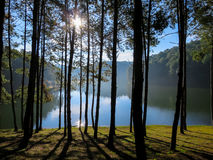 Morning scene of beautiful lake and mountain through pine trees. Peaceful morning scene of beautiful lake and mountain through pine trees with shadow on grass Royalty Free Stock Photo