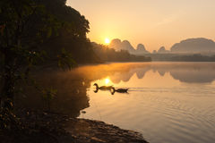 Morning Scene of Ducks in a Pond. stock images