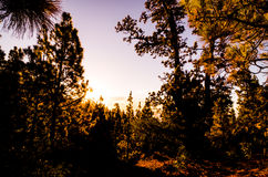 Morning Scene in the Forest Stock Photos