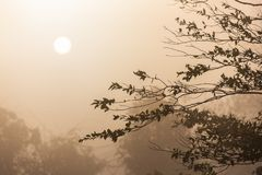 Morning scene of silhouetted tropical tree with fog Stock Image