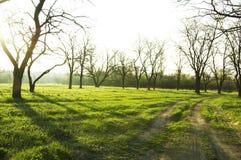 Morning scenery stock photos