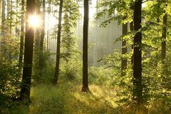 Morning scenery of misty summer forest stock images