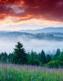 Morning scenery with red cloud and green grass Stock Photography