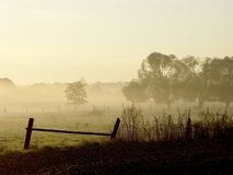 Morning scenery with tree in the fog Stock Image