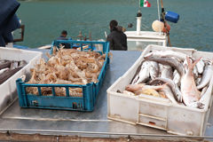 Morning sea haul. Closeup of sea haul: boxes with fish and langoustes Stock Photos