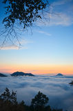 In morning. The sea of mist with tree's branch Royalty Free Stock Image