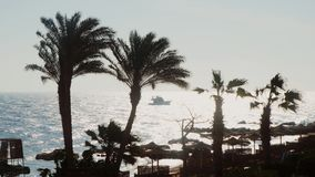 Morning at sea, a yacht with tourists swims in the distance. Silhouettes of palm trees in the foreground. Silhouettes of palm trees against the background of the stock footage