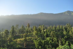 Morning Serenity in Bromo Mountain. A morning serenity in village around Bromo Mountain, Indonesia. Bromo is one of active volcano in this country that always Royalty Free Stock Photo