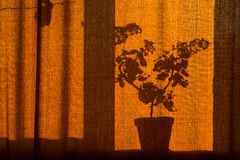 morning shadow from the flower on the curtain Royalty Free Stock Photography