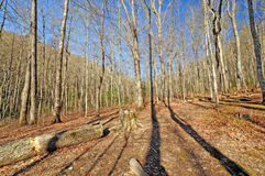 Morning Shadows in the Smokies Stock Photography