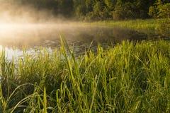 Morning in shore grass Stock Photos