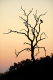 Morning Silhouette. Early morning in the Kruger National Park is refreshing. This dead tree has so much character and the bird gives the photo an anchor point Stock Photography