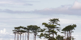 Morning sky of clouds and tree tops Royalty Free Stock Photo