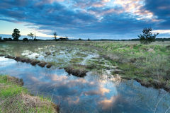 Morning sky reflected in swamp water Royalty Free Stock Photography