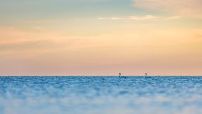The morning sky and swans on the horizon Royalty Free Stock Photos