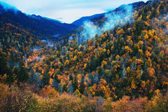 Morning in Smoky Mountains - colorful trees Royalty Free Stock Image