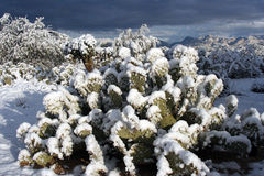 Morning Snow. Winter snow covers desert cactus, bushes and trees as the sun rises Royalty Free Stock Images