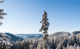 Morning snow-covered forest and mountain range of Montenegro in the distance. Carpathians. Ukraine Royalty Free Stock Photography