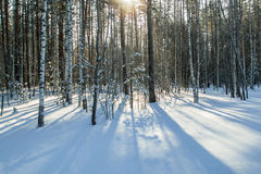 Morning snow forest winter frost sun ray Stock Photo