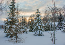 Morning snow forest winter frost sun ray Stock Photography