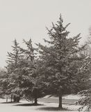 Morning snow. New York nature Royalty Free Stock Image