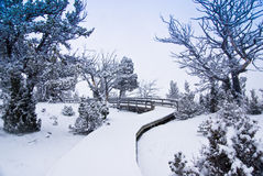 Morning Snow on Wooden Boardwalk. A light snowfall covers a wood boardwalk amid a forest of gnarly trees stock image