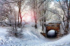 Morning In Snowy Forest Royalty Free Stock Photo