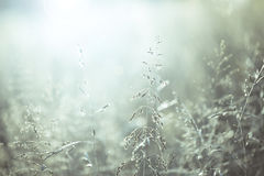 Morning soft blue colored blurry meadow Royalty Free Stock Photos