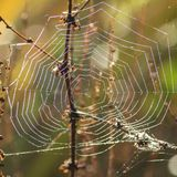 Morning spider`s web on Southampton Common stock photography