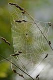 Morning spider web Royalty Free Stock Photography