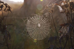 Morning spiderweb. Sunny morning spiderweb оn plants Stock Images