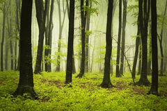 Morning in spring forest Royalty Free Stock Images