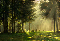 Morning in a spring forest Royalty Free Stock Images