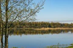 Morning dawn, spring flowering, landscape. royalty free stock photo