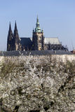 Morning Spring Prague gothic Castle and the green Nature and flowering Trees, Czech Republic Royalty Free Stock Photos