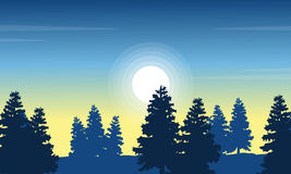 At morning spruce forest landscape. Vector art Royalty Free Stock Image