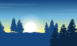 At morning spruce landscape silhouettes Royalty Free Stock Photo