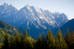 Morning spruces and mountains Royalty Free Stock Image