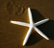 Morning starfish. Starfish on the beach Stock Images